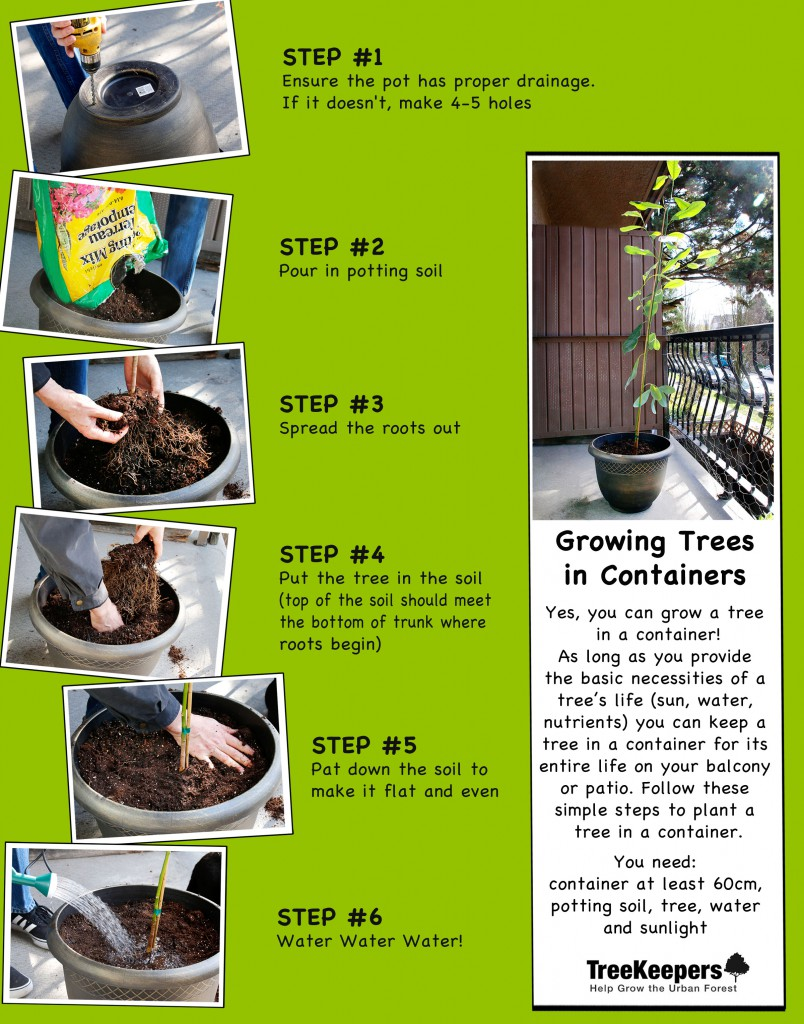 ContainerGrowingSteps